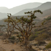 Jebel safari full day