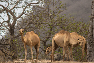 treasures-dhofar_pi